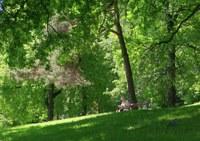 Proměna Zámeckého parku uspěla v prvním kole