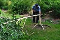 Neznámý vandal poničil lípy v Zámeckém parku