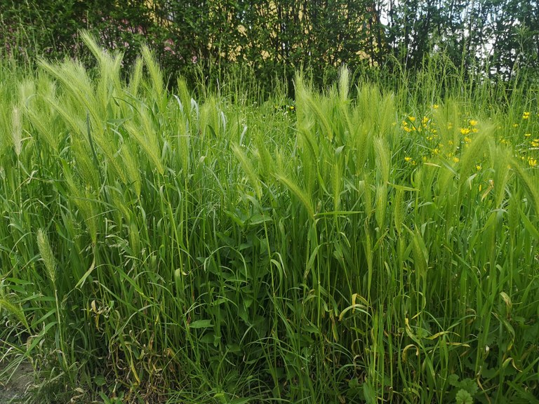 Poruba ukončila smlouvu s firmou, která měla kosit trávu