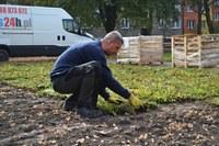 Travní koberec lze využít i k výsadbě květin