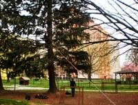 Vybrané stromy prověřily tahové zkoušky